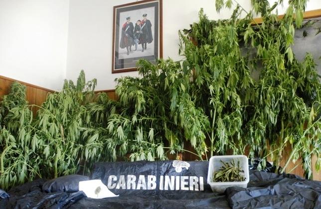marijuana manette